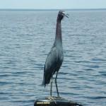 Lake Weohyckapka -wwwbassfishingcentralflorida.com
